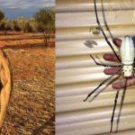 22 Animales en Australia que te ponen los pelos de punta.