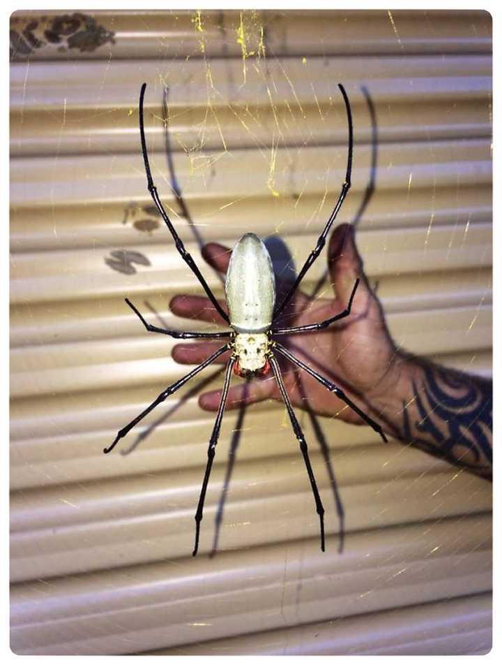 22 Animales en Australia que te ponen los pelos de punta. 6