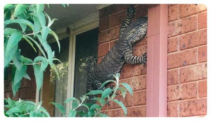 22 Animales en Australia que te ponen los pelos de punta. 21