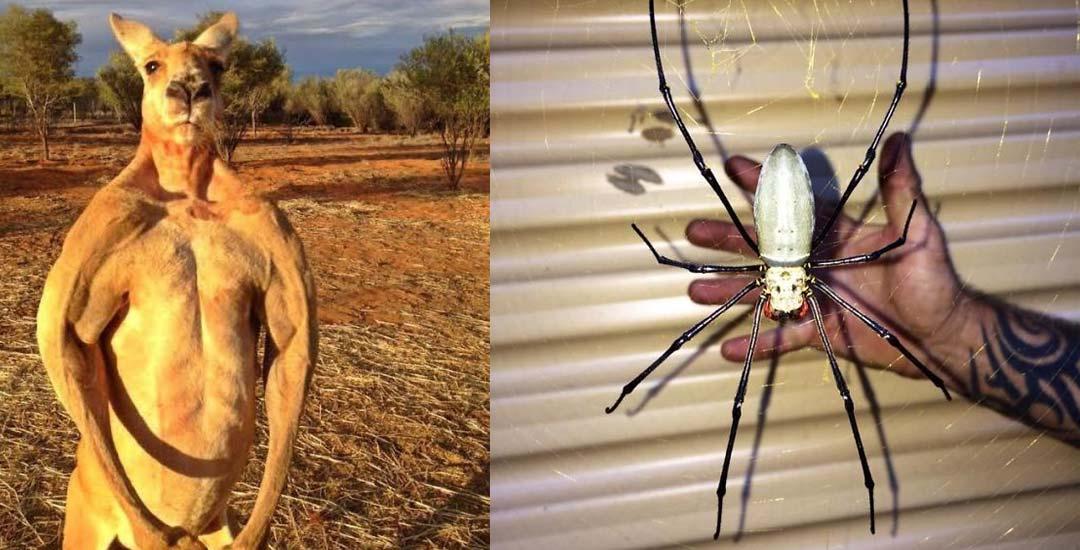 22 Animales en Australia que te ponen los pelos de punta. 1